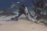 Thợ lặn thò tay vào hàm cá mập
